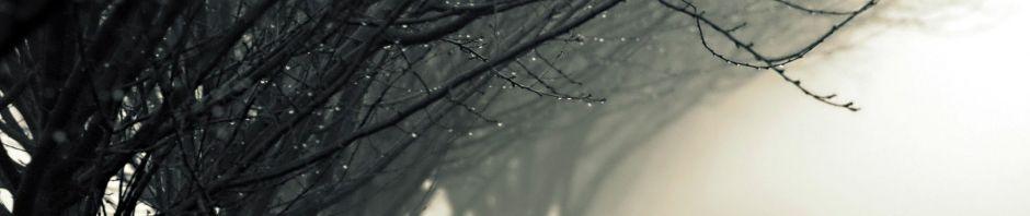 Nature trees with rain